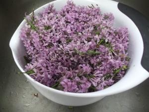 Lilac 011