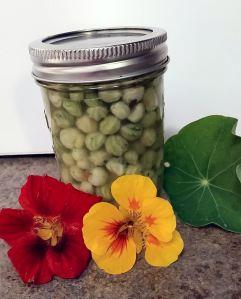 Pickled Nasturtium Seed Buds Dianes Food Blog